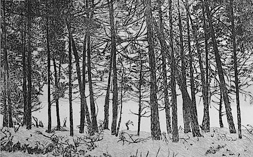 Glenshee - Winter, © Kirstie Behrens