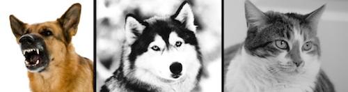 dogcat1