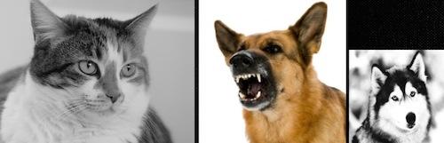dogcat3