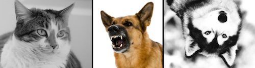 dogcat4