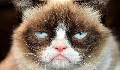 wlgrumpycat